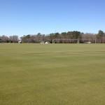 bentgrass sod field