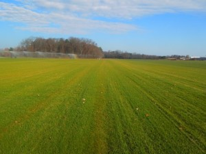 Tall Fescue Sod Field