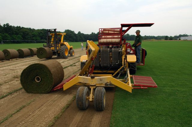 Big Roll Sod Harvest